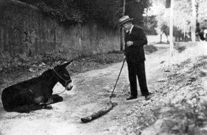 8 di 17 - Luigi Pirandello osserva un asino che giace lungo la strada.