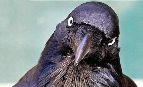 Il corvo di Mìzzaro – Audiolibro